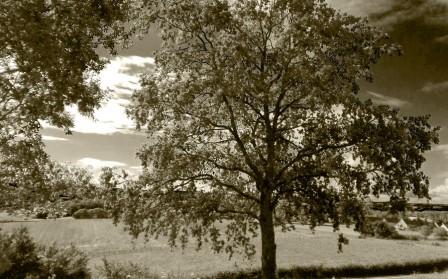 arbre-saint-jean-900.jpg