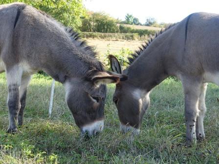 11-rando-ânes.jpg